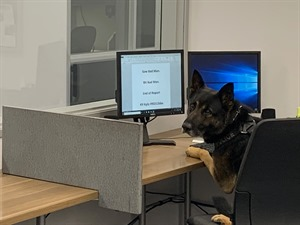 K9 Kylo writing report during social distancing (1).jpg